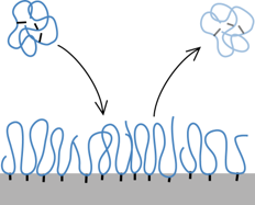 polymerAdsorption